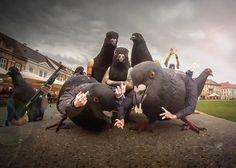 Pigeon thug life.