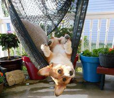 Dawg dayz of summer