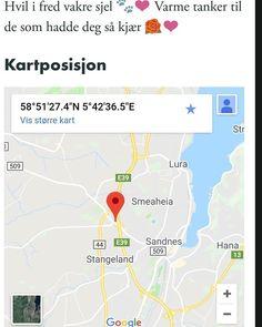 Flerfarget - død katt funnet i Årsvollveien Rogaland. (link: http://dyrebar.no/72697/) dyrebar.no/72697/ #katt #funnet  Flerfarget - død katt funnet i Sandnes  07.03.2018 17:58