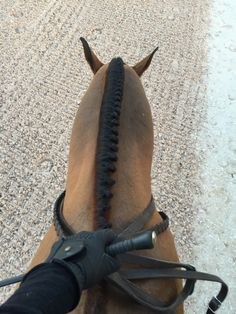Dressage ~ riders view, braided mane, entering fresh raked ring