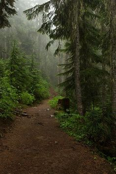 All in favor to vote that it's one of the best trail in the forest say aye (Beauty Scenery Farm) Forest Path, Deep Forest, Conifer Forest, Forest Trail, Evergreen Forest, Foggy Forest, Misty Forest, Forest Road, Beautiful World