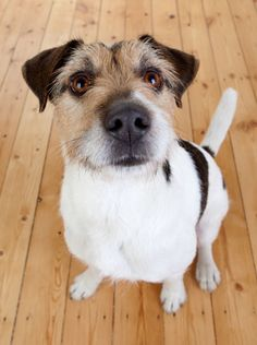 Kuchen-fuer-den-Hund Corgi, Training, Animals, Treats, Dog Biscuit Recipes, Diy, Tutorials, Corgis, Animales