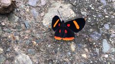 Hitchhiking Through Paradise Insects, Posts, Facebook, Colombia, Messages