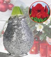 Amaryllis Glitter Silver  1 kpl