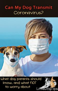 Can Dogs Transmit Coronavirus? Training Tips, Dog Training, Funny Dogs, Cute Dogs, Dog Test, What Dogs, Dog Mom Gifts, Dog Stories, Aggressive Dog