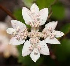 Confid Essence: 50ml Australian Bush Flower Essence