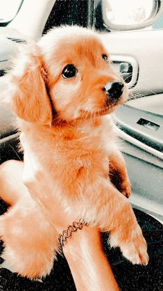 Super Cute Puppies, Baby Animals Super Cute, Cute Baby Dogs, Cute Funny Dogs, Cute Dogs And Puppies, Doggies, Adorable Dogs, Cute Puppy Pictures, Cute Animal Photos