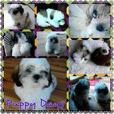 Puppy Days Puppy Day, Puppies, Pets, Animals, Animals And Pets, Animales, Animaux, Puppys, Animal