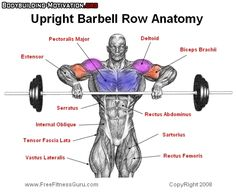 upright_barbell_row_anatomy_2014-04-03_16-02-31.jpg (600×498)
