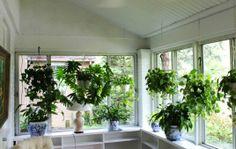 Sunroom Design for Plants
