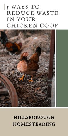 Chickens backyard - How to Reduce Waste in Your Chicken Coop – Chickens backyard A Frame Chicken Coop, Backyard Chicken Coops, Chickens Backyard, Backyard Poultry, Keeping Chickens, Raising Chickens, Strawberry Beds, Homestead Survival, Homestead Farm
