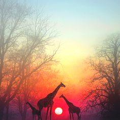 safari sunset...one day