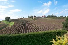 Now is the time to visit vineyards in Champagne, producers of the wine, and it's spectacular towns. See how to visit the famous Champagne region. Champagne Region, Tasting Room, Wineries, Wine Country, Vineyard, Photography, Travel, Outdoor, Vine Yard