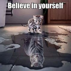 Never underestimate a kitty, kitties can roar like a tiger Animals And Pets, Baby Animals, Funny Animals, Cute Animals, Animal Memes, Cute Kittens, Cats And Kittens, Tier Fotos, Big Cats