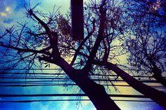 Lomographied trees