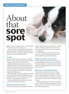 Lincoln square vet hospital lsvets on pinterest about that sore spot dogs and cats dvm 360 solutioingenieria Images