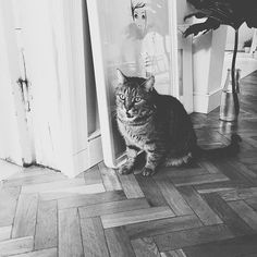 Instagram photo by @mle_collection | Iconosquare Behind The Scenes, Cats, Animals, Collection, Instagram, Gatos, Animales, Animaux, Animal