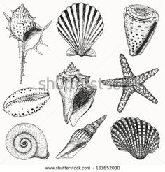 Shell Stock Photos, Images, & Pictures   Shutterstock