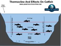 fishing rigs for catfish | ... catfish that nighta louise abig catfish are also produce balloon rig