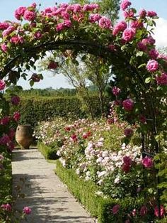 Jardim de rosas.
