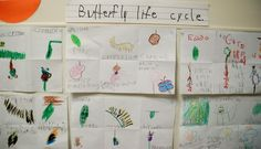 A display board for the CCLC Kindergarten students who illustrated butterfly life-cycle.