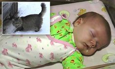 The tabby cat named Marsha climbed into the box the infant had been dumped in and kept the child warm for several hours as the mercury plunged below zero in Obninsk, Russia.