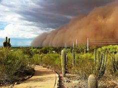 "Dust storm in the Sonoran Desert aka ""HABOOB"""