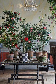 drottingholm ' www.lottensvita.blogspot.com