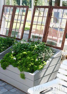 Hurmaavat valkoiset kasvilavat saavat kivasti särmää tummanruskeista, ikkunamaiseksi nikkaroiduista kansista. www.kotipuutarha.fi