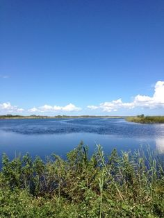 This is the Everglades in Florida and it is very intresting and full of wonderful wild creatures.