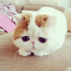 Cat or Hamster? Innocent and sad.