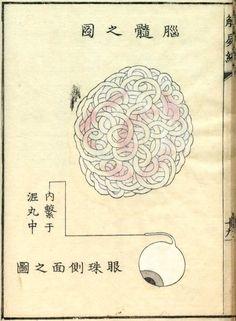 江戸時代の医学がわかる人体解剖図、病医学図