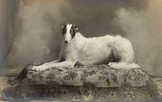 +~+~ Antique Photograph ~+~+  Elegance in a dog.