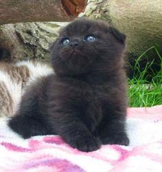 Little blue eyed baby