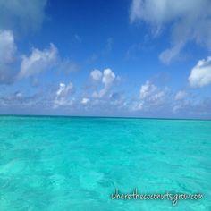 Good Fishing and Pretty Beaches at North Rock, Bimini, Bahamas www.wherethecoconutsgrow.com