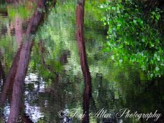 Reflected Trees by Toni Allen