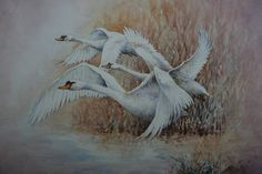 Swans Out of the Rushes, 2015 christopher hughes  Watercolor  Unique Work  Size : 10 x 12 x 0.2 in.