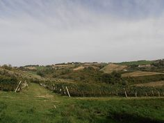 La Marca Biodynamic vineyard near Cupramontana.
