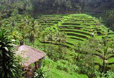Bali, Indonésie (iStock)