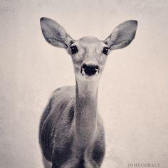 deer #dailyconceptive #diarioconceptivo