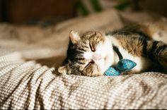 Cat kitten adorable gorgeous