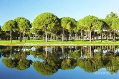 Reflections In Blue And Green  by Ekaterina Molchanova  #EkaterinaMolchanova #molchanovafineart #molchanovaphoto #travel #fineartprints #homedecor #golf #landscape #artforhome