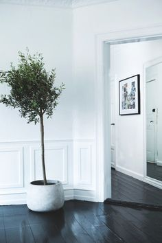 modern moldings, black floor