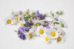Mezi jedlé květy patří např. levandule, sedmikráska nebo fialka.