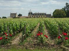 Château la Mission Haut Brion #bordeaux #accademiavino