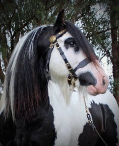 Horse Photos, Horse Pictures, Animal Pictures, Horses And Dogs, Wild Horses, Most Beautiful Animals, Beautiful Creatures, Zebras, Gypsy Horse
