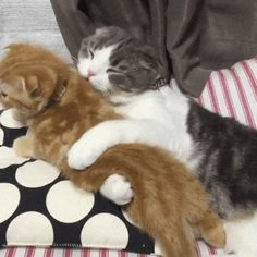 You can't run out from my love. Funny cats gif