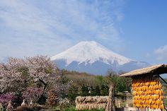 富士山 忍野村 Mt.Fuji at oshino