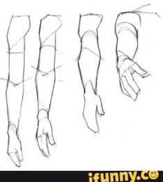 partes del brazo antebrazo y mano