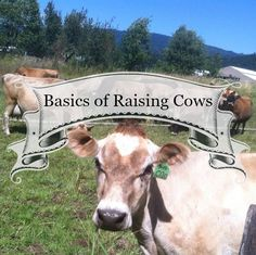 Basics of raising cows – Homesteading Guide Cattle Farming, Goat Farming, Livestock, Beef Farming, Raising Farm Animals, Raising Chickens, Cow Tipping, Mini Cows, Mini Farm
